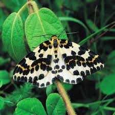 Peppered Moth and <b>natural selection</b> - Moths Count