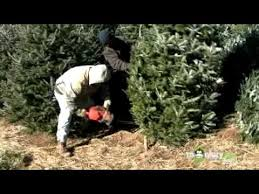 Behind the Scenes of a Christmas Tree Farm - YouTube