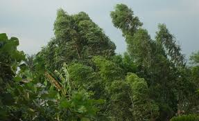 Image result for wind blowing trees