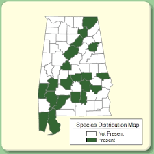 Eragrostis cilianensis - Species Page - APA: Alabama Plant Atlas