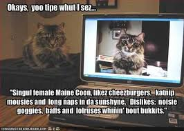Pictures that make you   Aww  Cat Facts and Funnies   Page       Maine Coon Fancy