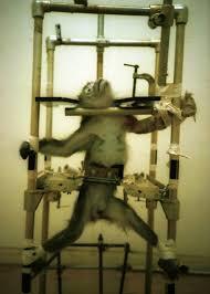 <b>Cruelty</b> to animals - Wikipedia