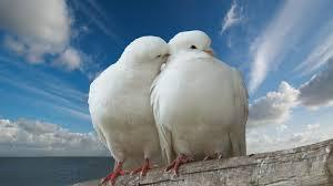 <b>pigeon</b>, <b>kiss</b>, clouds, dove, trunk, romantic, peace, sky, romance, sea ...