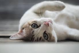 76 <b>Funny</b> Names for <b>Cats</b>