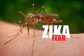 Hasil gambar untuk virus zika