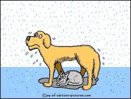 Τα ζώα μας δείχνουν την αγάπη...
