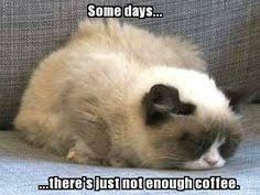 grumpy cat by Chloé on Pinterest | Grumpy Cat, Funny Pets and Dog ... via Relatably.com