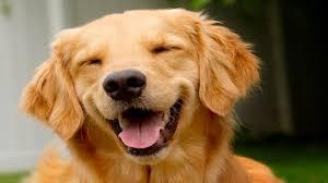 <b>Смешные собаки</b> и щенки   Топ-подборка приколов с собаками за ...