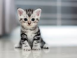 See the <b>Cutest Cat</b> Breeds as Kittens | Reader's Digest