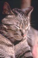 Loving Care for <b>Older Cats</b> | Cornell University College of Veterinary ...
