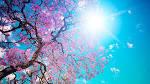 spring up