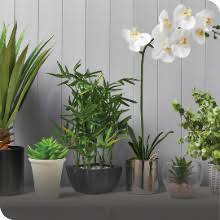 Vases & <b>Artificial Plants</b> | The Range