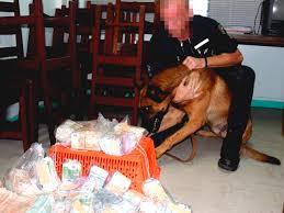 """Résultat de recherche d'images pour """"photos chiens policiers"""""""