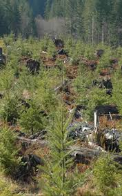 Clearcutting | Oregon Forest Resources Institute via Relatably.com