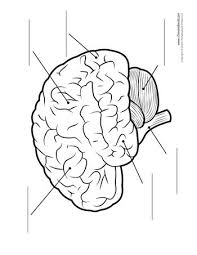 17 best ideas about human brain diagram on pinterest human brain on simon cat 6 wiring diagram