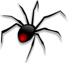 Image result for images of cartoon spiders