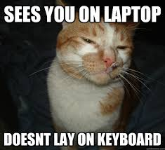 Best of the Cool Cat Craig Meme (20 Pics) | Pleated-Jeans.com via Relatably.com