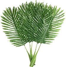 Warmter Faux Palm Leaves 5 Pack Palm Leaves Fake ... - Amazon.com