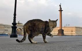 Картинки по запросу раздача котов эрмитажа 17 апреля