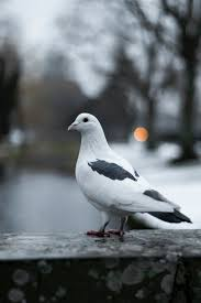 500+ <b>Pigeon</b> Pictures | Download Free Images on Unsplash