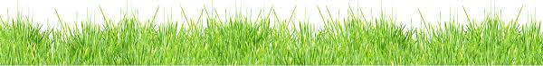 Image result for grass