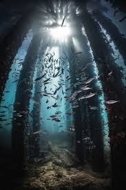 best ideas about underwater ocean photography 17 best ideas about underwater ocean photography underwater photography and pink ocean