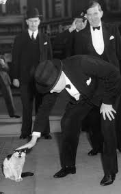 winston churchill pats a cat a nation of cat lovers favourite winston churchill pats a cat