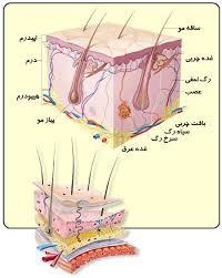 دانستنی های پوست