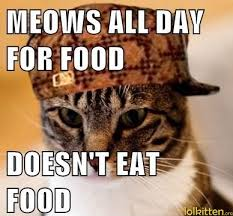 Hungry Cat Is Not Hungry | LolKitten via Relatably.com
