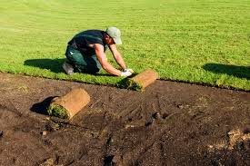 Картинки по запросу рулонный газон фото