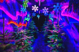 Swansea <b>Winter</b> Wonderland - Gower Fresh <b>Christmas</b> Trees