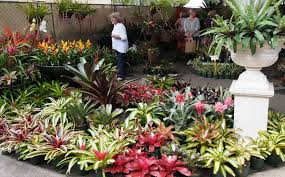 Small Picture Tropical Garden Ideas Brisbane After N Inside