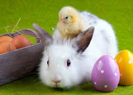 Image result for Easter Bunny picture