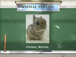 persuasive essay animal testing   academic essay animal testing argumentative essay