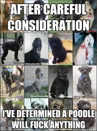 Deep research into Poodle psychology : pikdit via Relatably.com