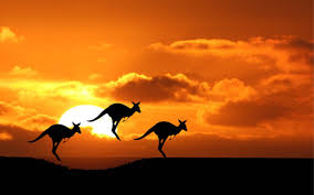 Image result for kangaroos in australia