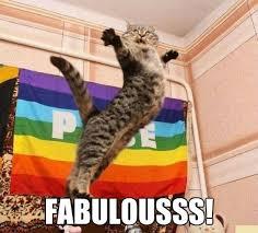Cranky Cat Memes - CrankyCatMemes.com via Relatably.com