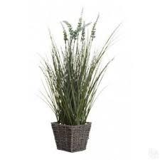 Купить Комнатные <b>растения</b> в Москве - Я Покупаю