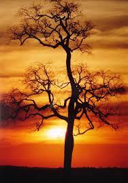 Resultado de imagem para ano do sol regente inverno