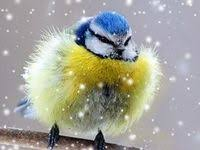 Nature - Other: лучшие изображения (136) | Funny animals, Cutest ...