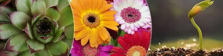 Image result for horticulture banner