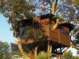 Best Treehouse Plans and Designs   Coolest Tree Houses Everan office fit for a treehouse maven