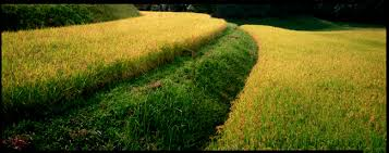 japanese organic farming movement food was raiment for the inside of the body  the outside of food was raiment for the outside of the body  there was no method to farming in this ancient