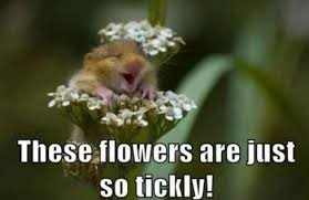 funny animal memes tumblr   Funny Pictures,Wallpapers,Funny Quotes ... via Relatably.com