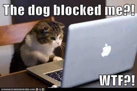 Cat-Facebook-Meme via Relatably.com