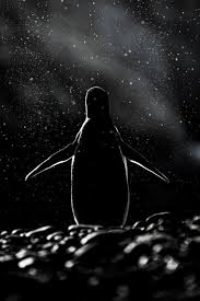 best ideas about penguin pictures emperor 20 beautiful pics to celebrate penguin awareness day <3