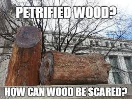 Petrified wood? : funny via Relatably.com