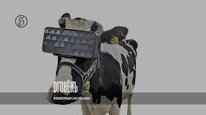 <b>Очки виртуальной реальности</b>, устройство для коров – Огонек ...