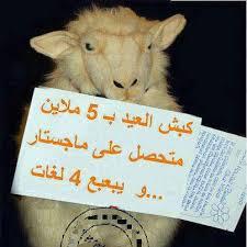 لنضحك مع الكباش ههههههه images?q=tbn:ANd9GcT