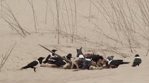 Resultado de imagen para pajaros en el desierto